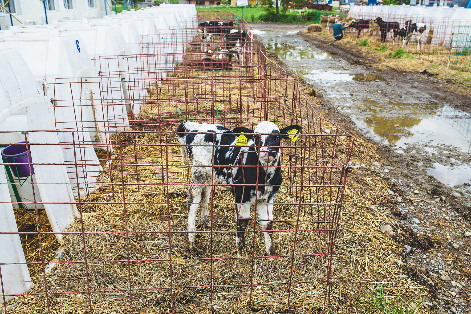 DAIRY FARM – UKRAINE 2019